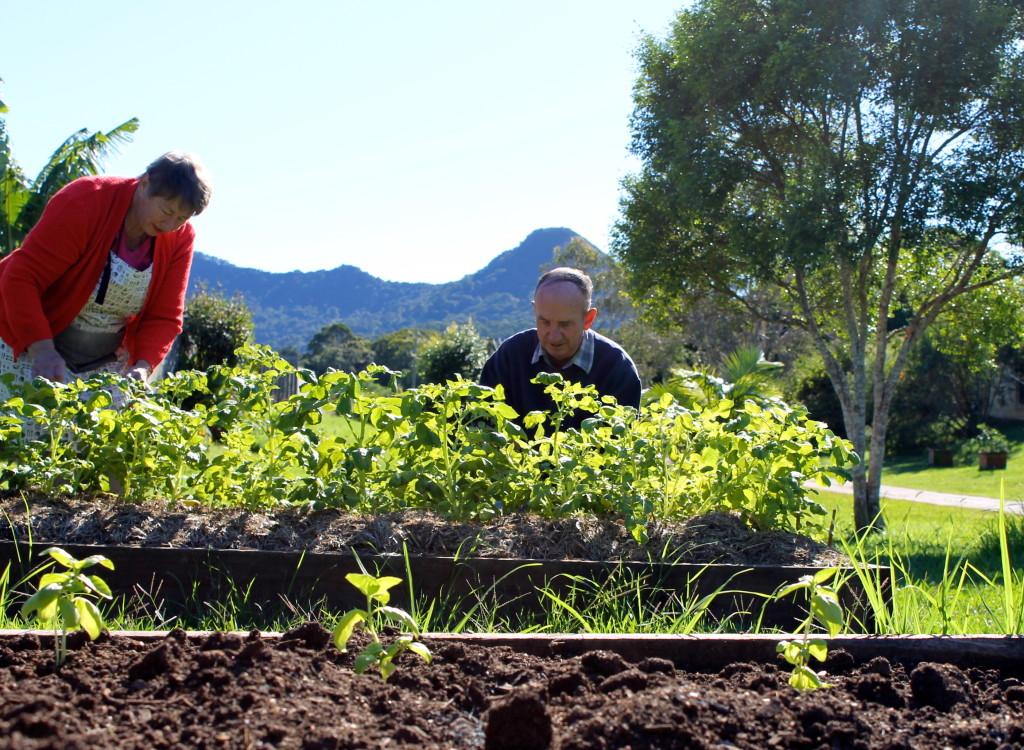 Beryl and Peter Judd at the Tallowood Ridge Community Gardens